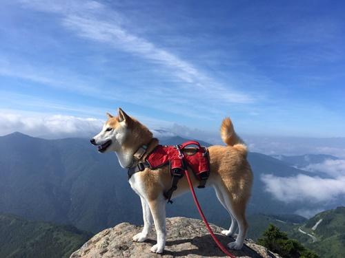【志賀高原】サクッと笠岳登山