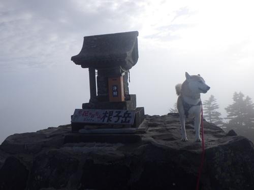 根子岳と四阿山登山②(菅平牧場登山口→根子岳山頂)