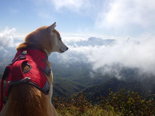 根子岳と四阿山登山③(根子岳山頂→四阿山山頂)
