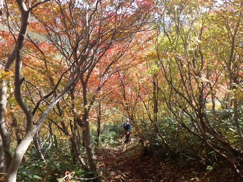 富士見峠へ2