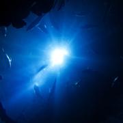 青海中魚pixabay