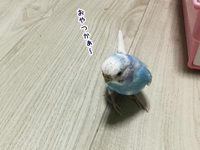 IMG_6911j.jpg