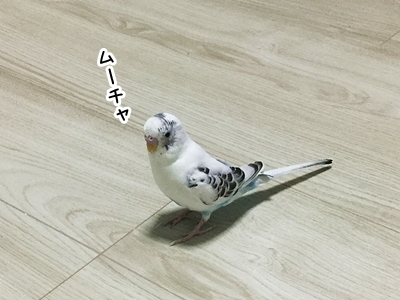 IMG_7379j.jpg