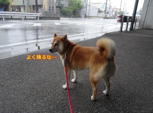 3スゲー雨