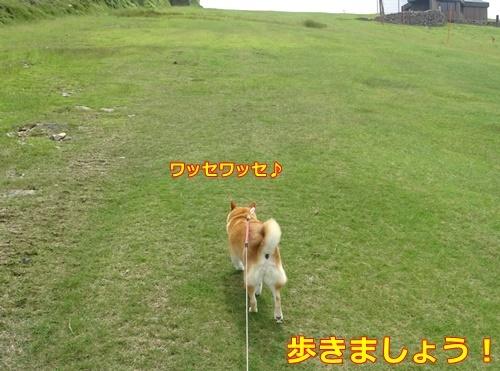 2お散歩です