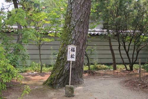 himawari170731-2089.jpg