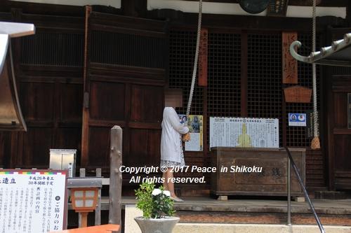 himawari170731-2105.jpg