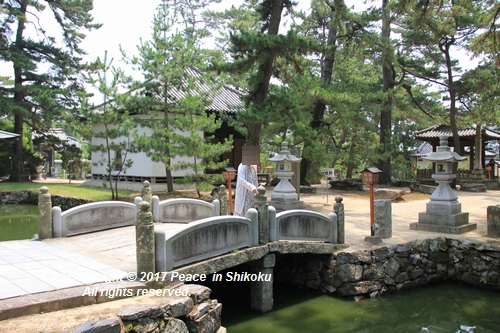 himawari170731-2112.jpg