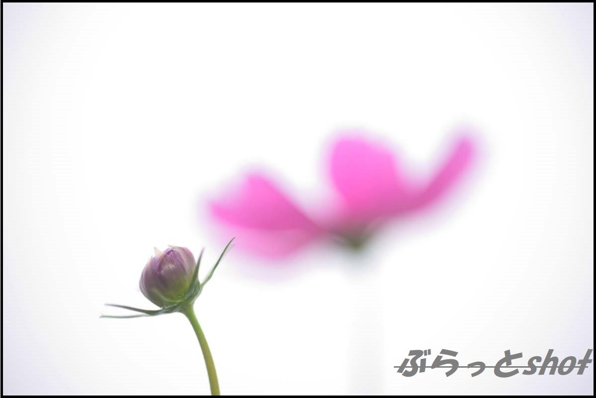 DSC_2670 (2)
