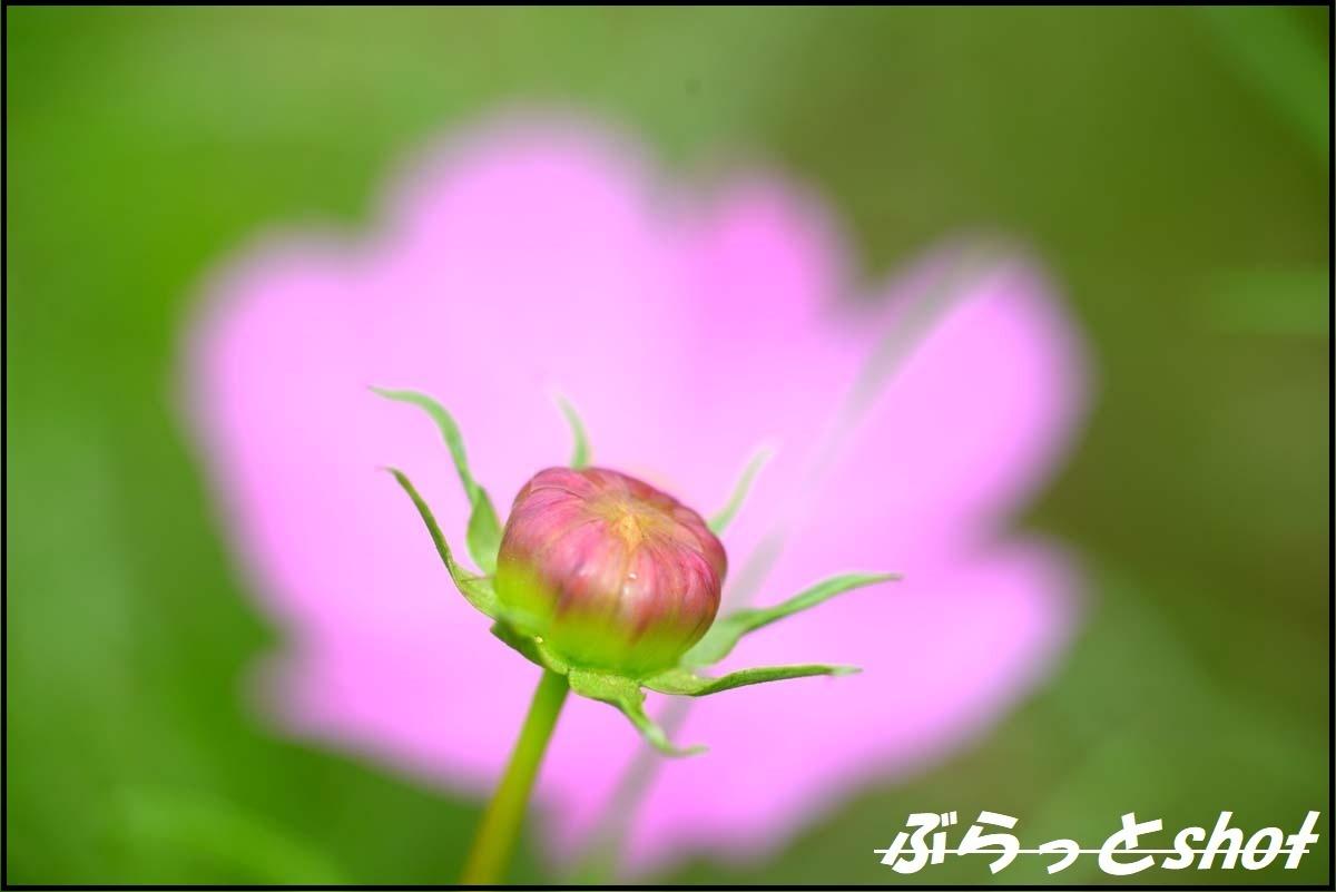 DSC_2573.jpg