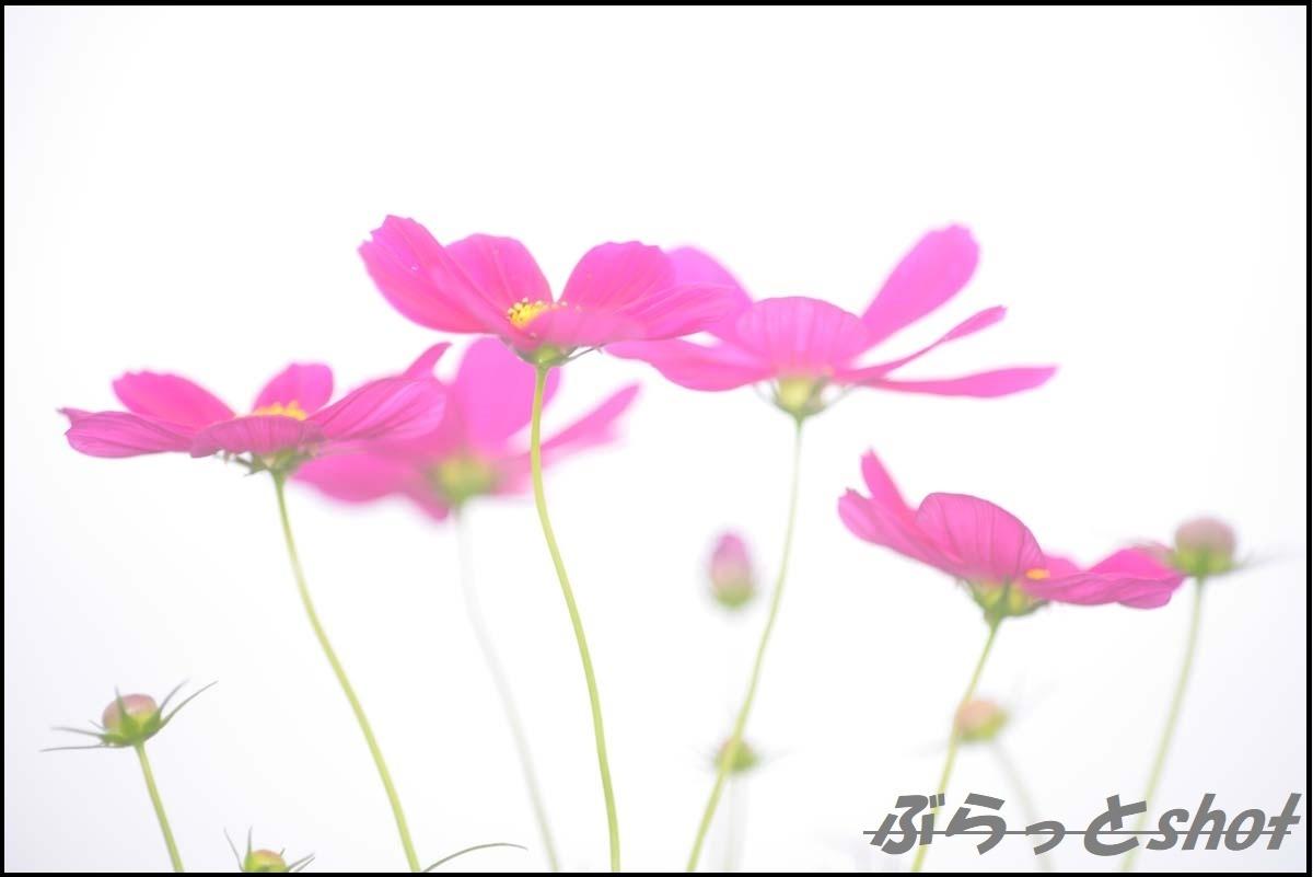 DSC_2646.jpg