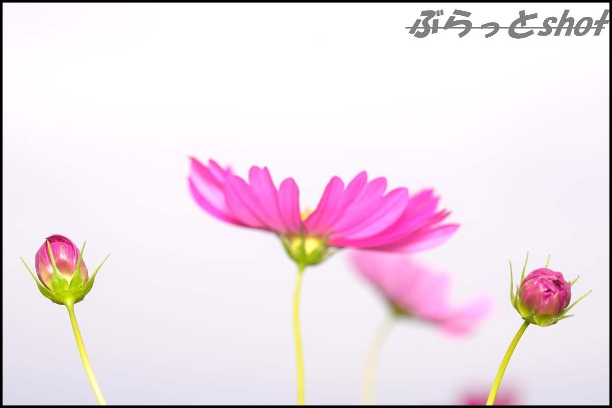 DSC_2700.jpg