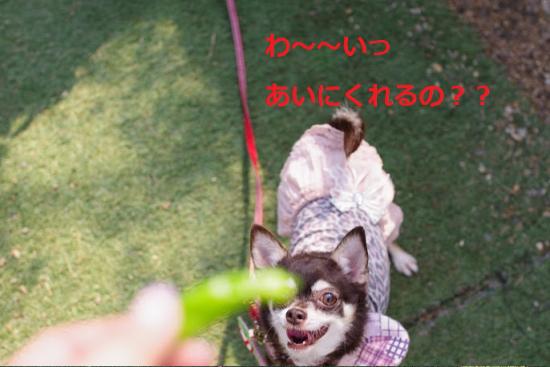 はろぃん003