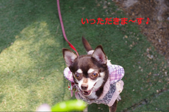 はろぃん004