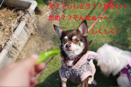 はろぃん005