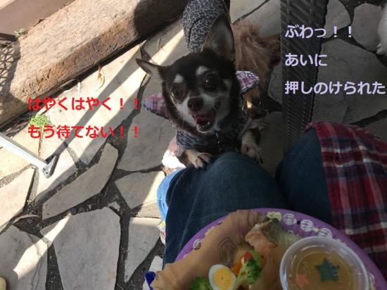 はろぃん024