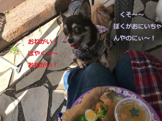 はろぃん025