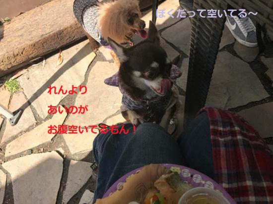 はろぃん026