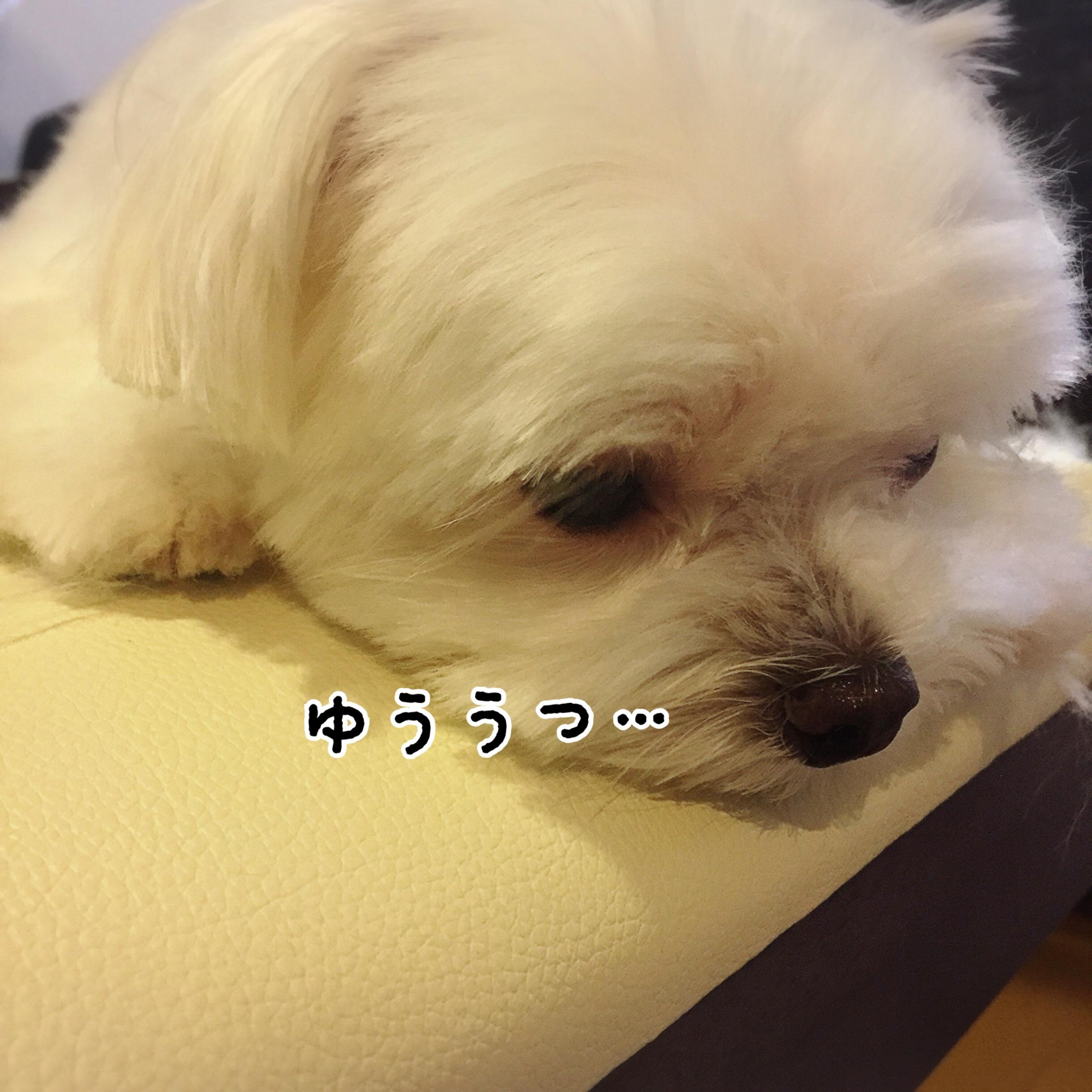 fc2blog_20170928210939f06.jpg