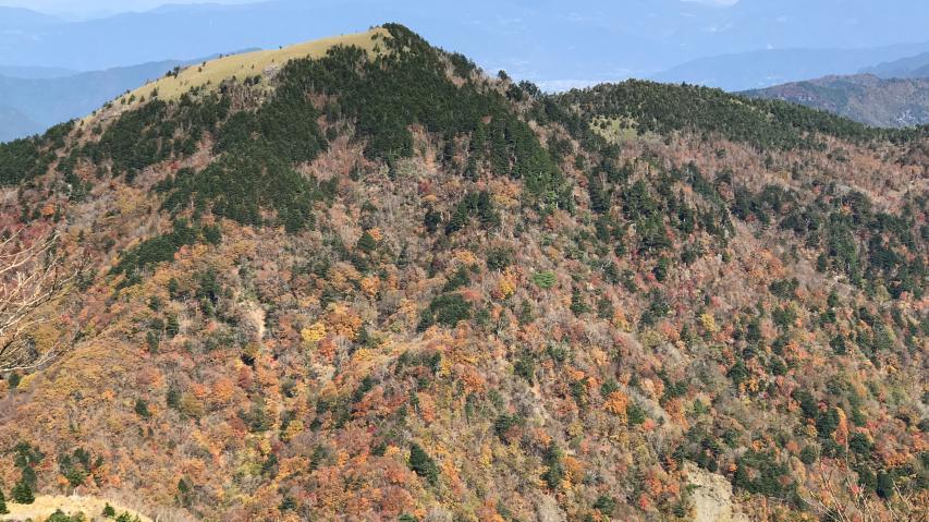 丸笹山の南斜面で紅葉の最中