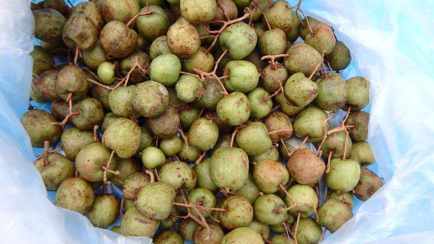 サルナシの果実