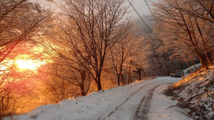 霧氷の朝焼け