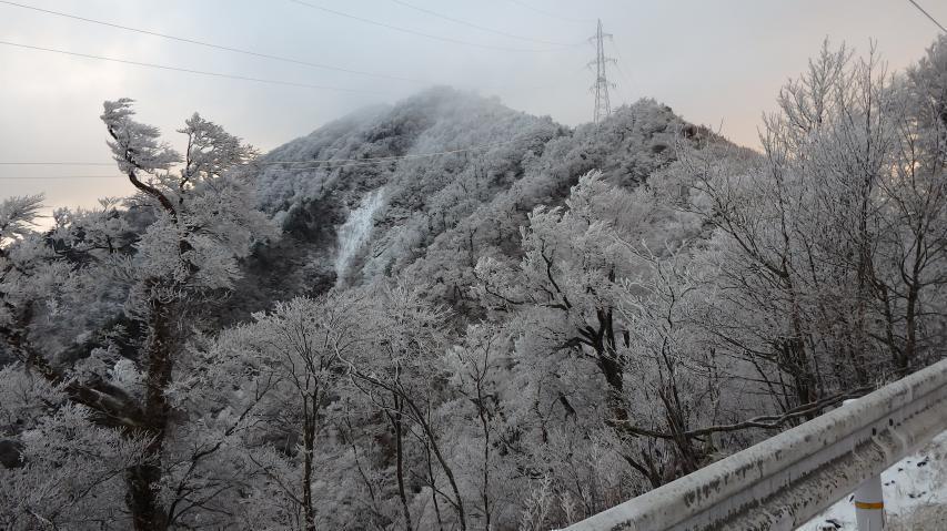 木々には霧氷がついて、白い花が咲いているよう