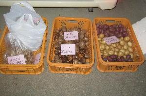 収穫祭準備 (4)