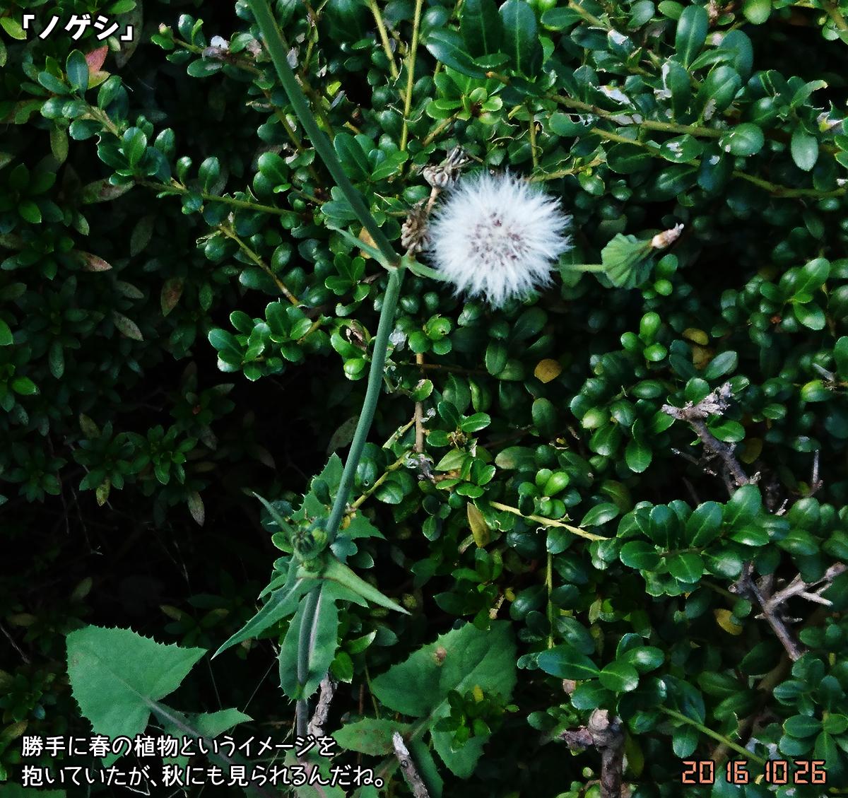 DSC_0343_2.jpg