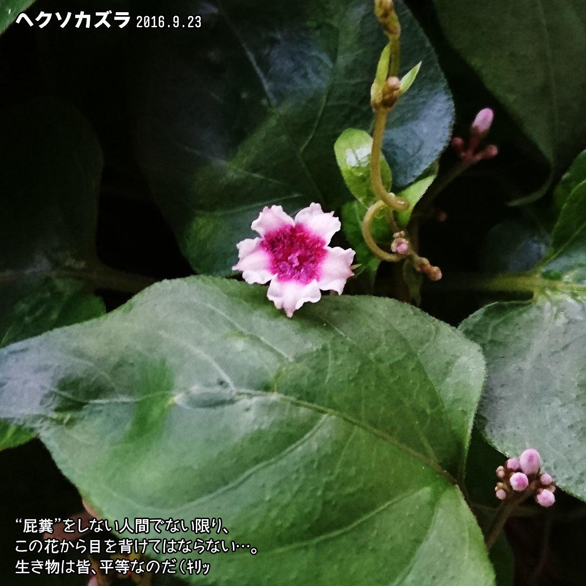 DSC_1458.jpg