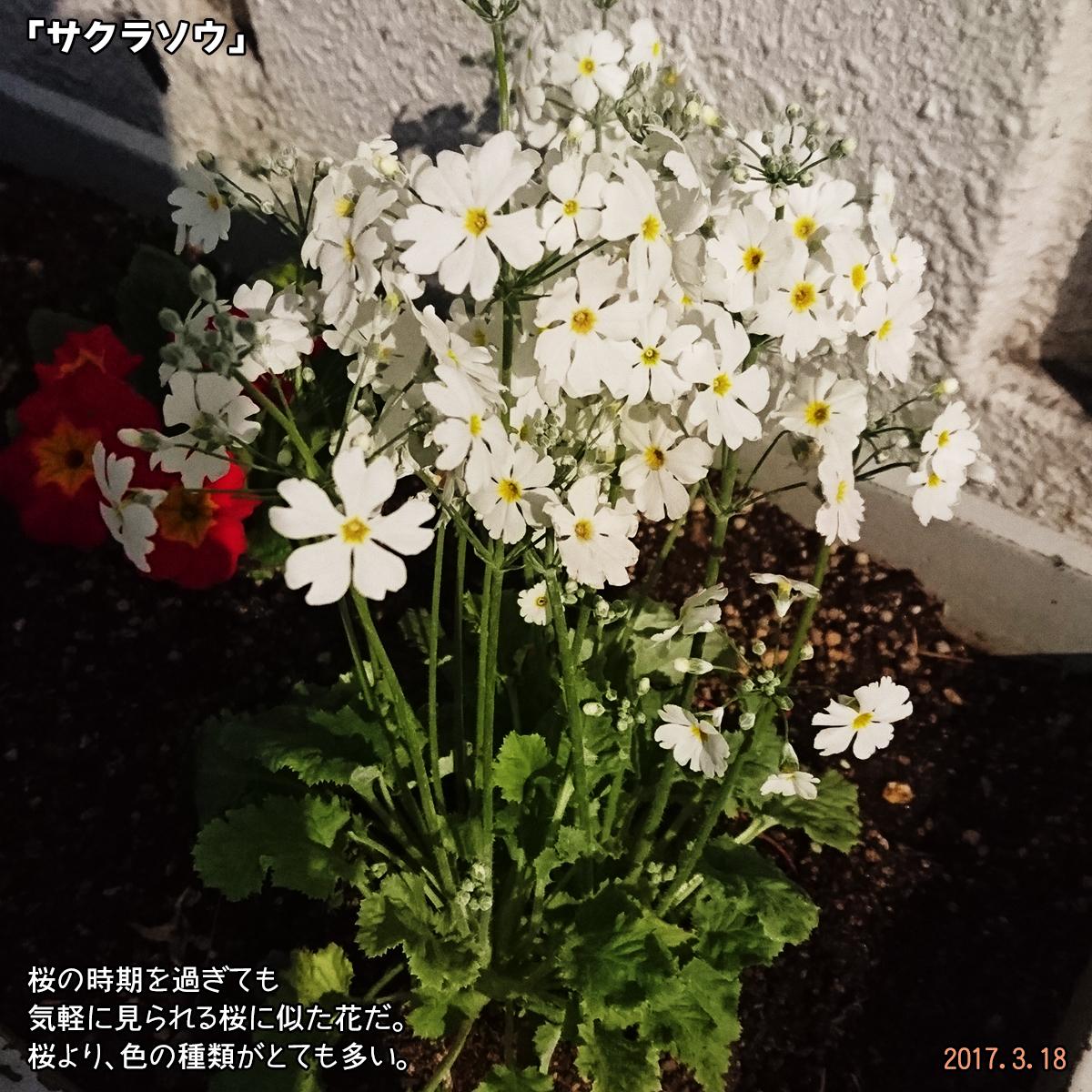 DSC_1957_1.jpg