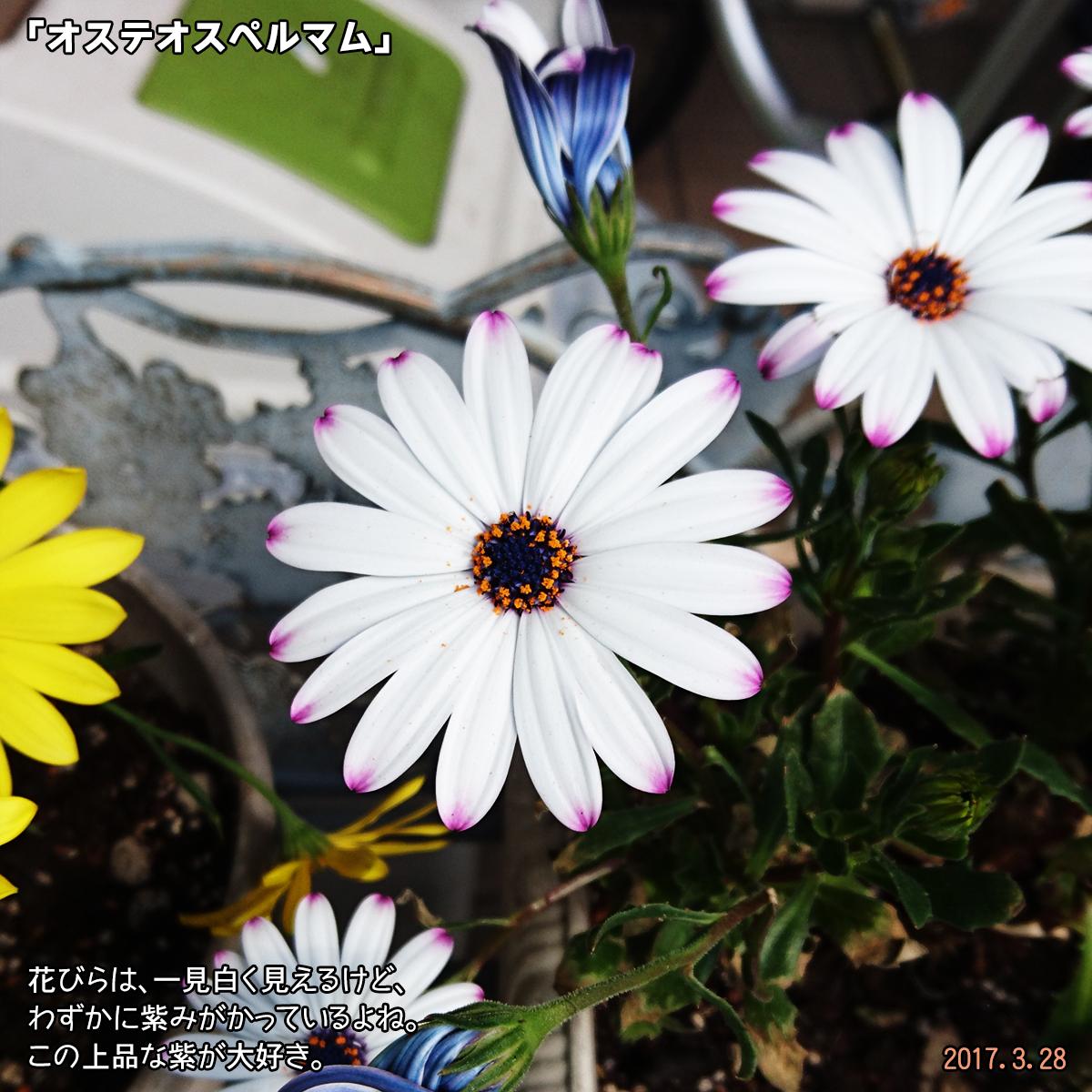DSC_2142_1.jpg