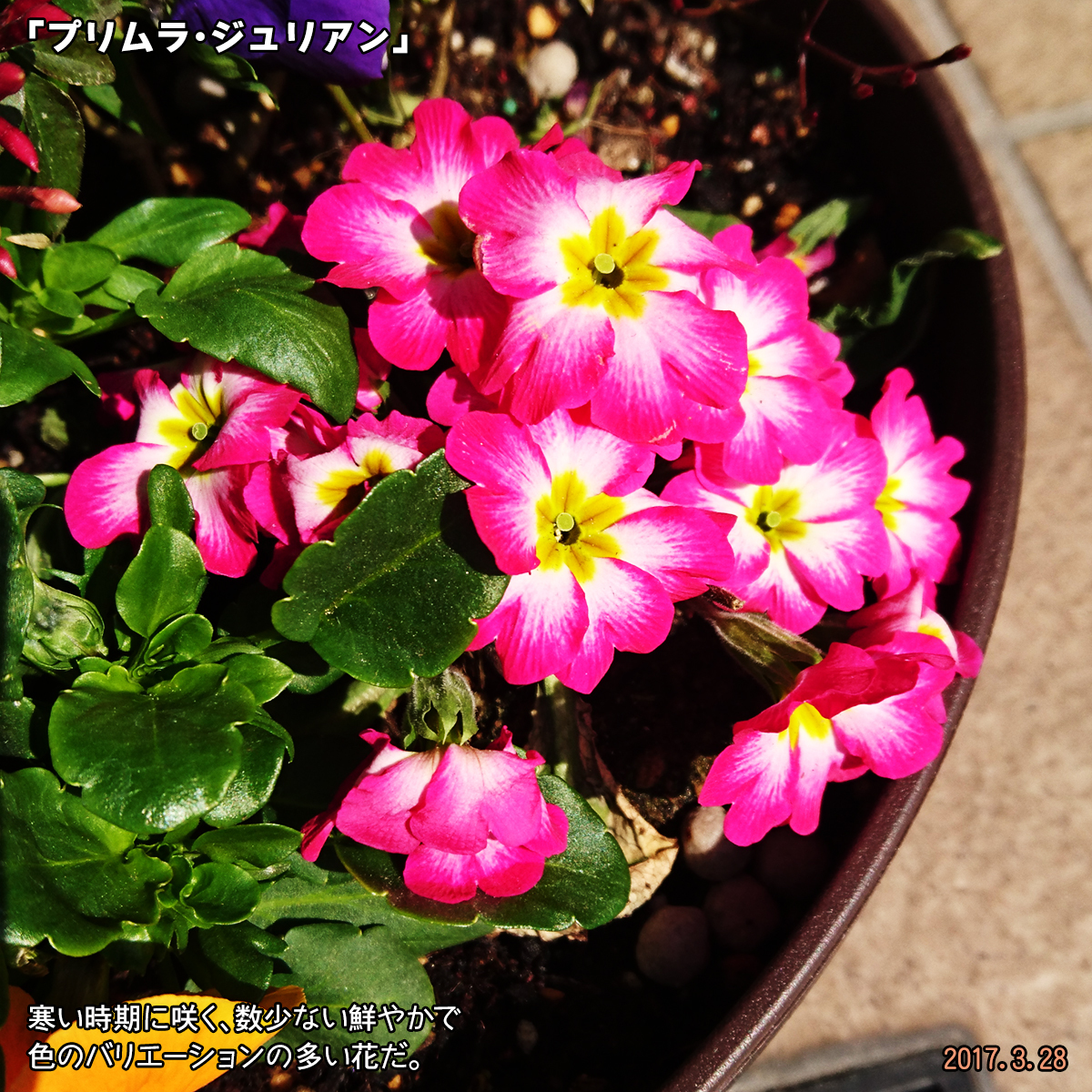 DSC_2149_1.jpg