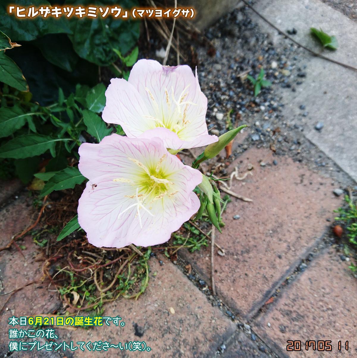 DSC_2222_20170621142821a50.jpg