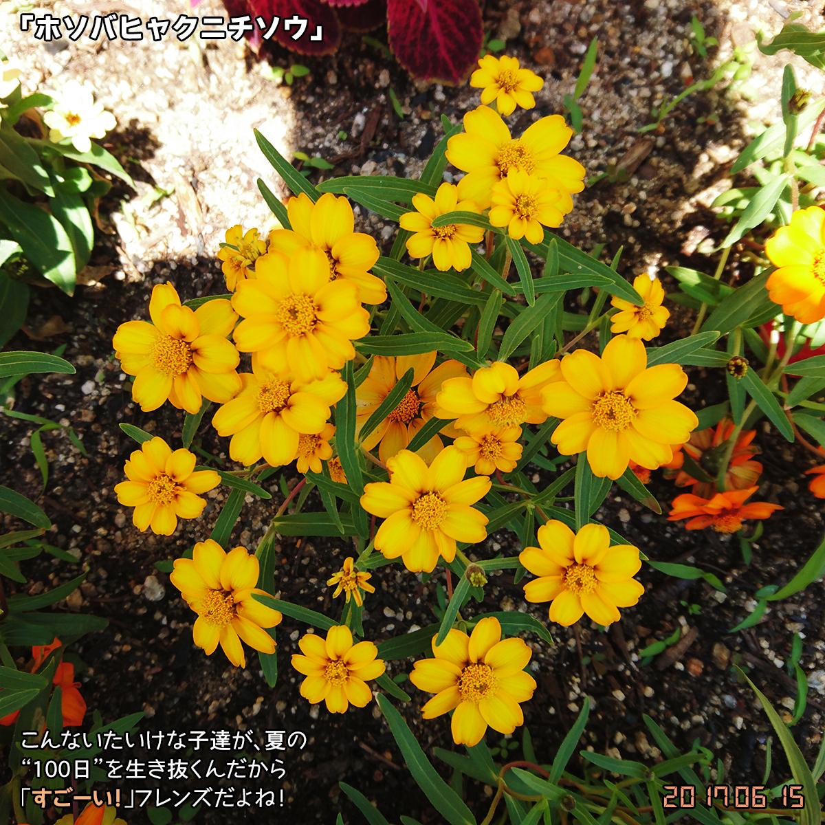 DSC_2855.jpg