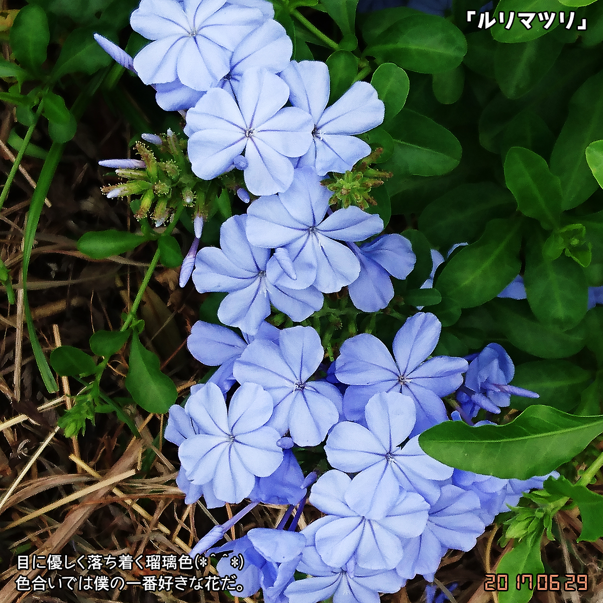 DSC_2989.jpg