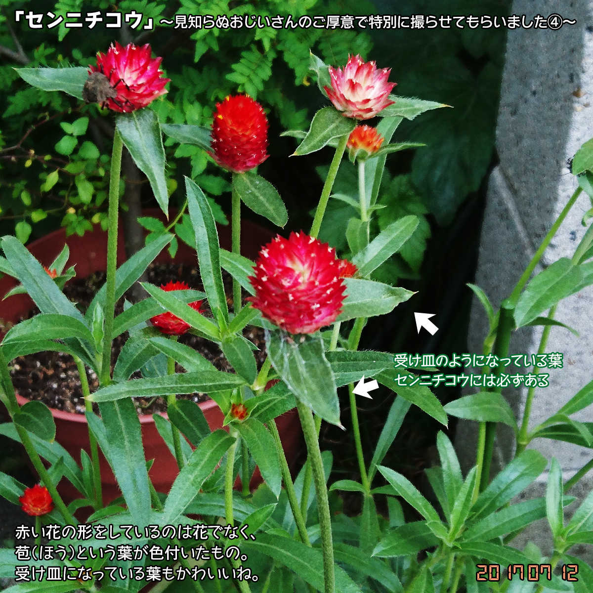 DSC_3132.jpg