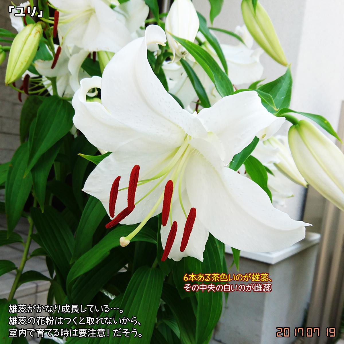 DSC_3174.jpg