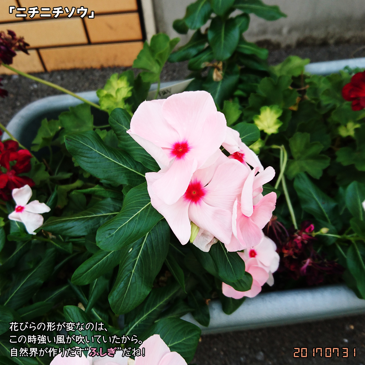 DSC_3319.jpg