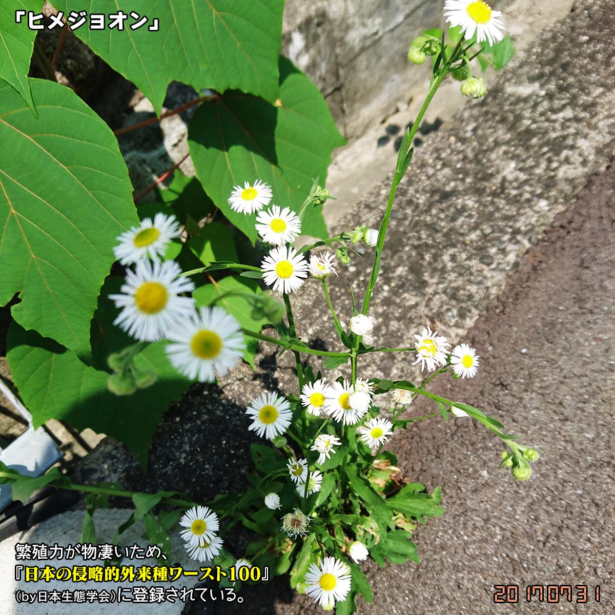 DSC_3340_20170812175336e2b.jpg