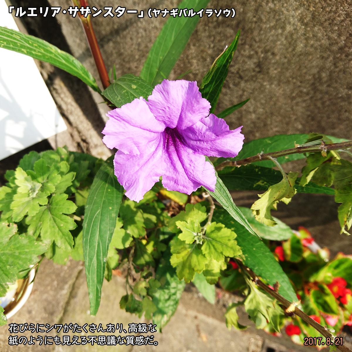 DSC_3594.jpg