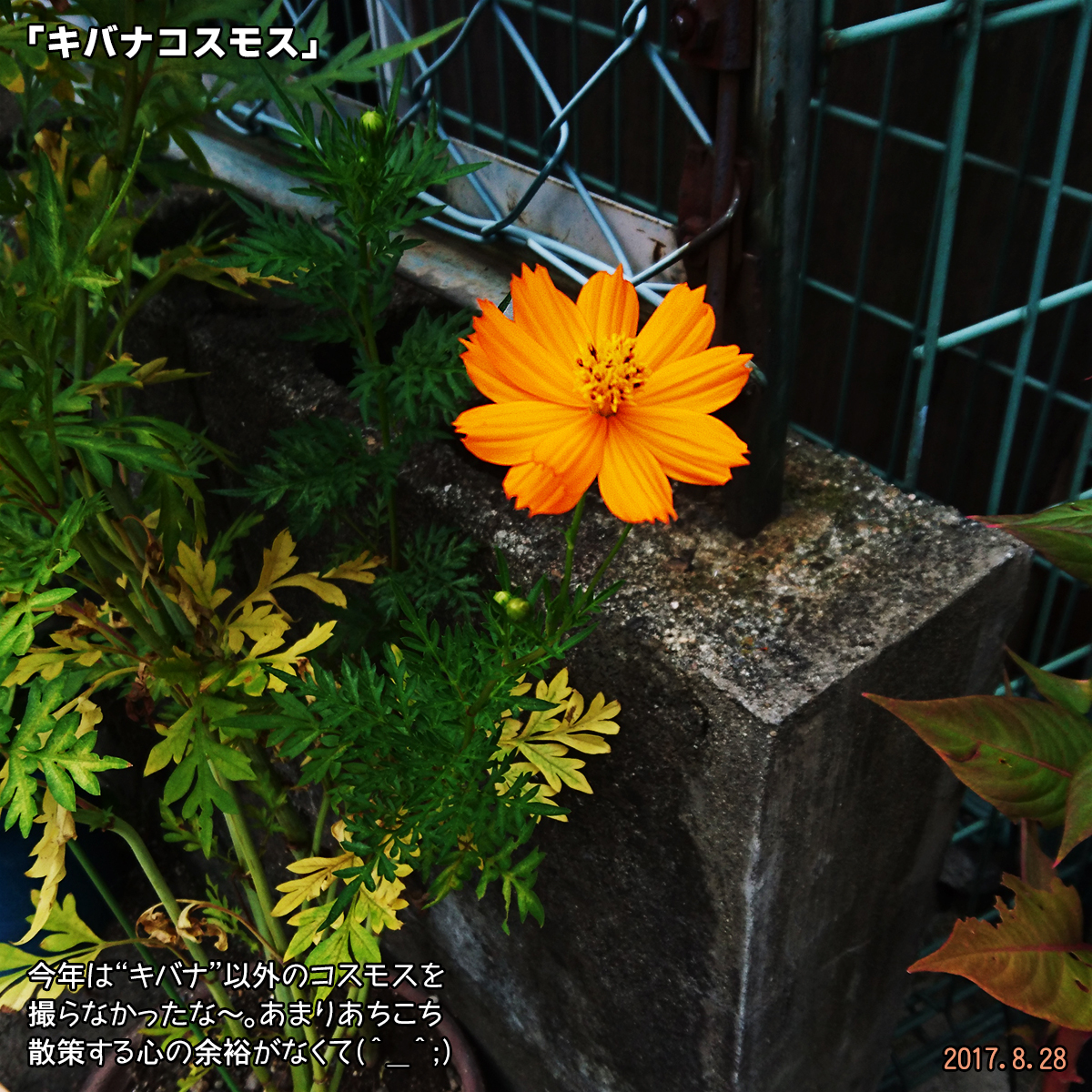 DSC_3665.jpg