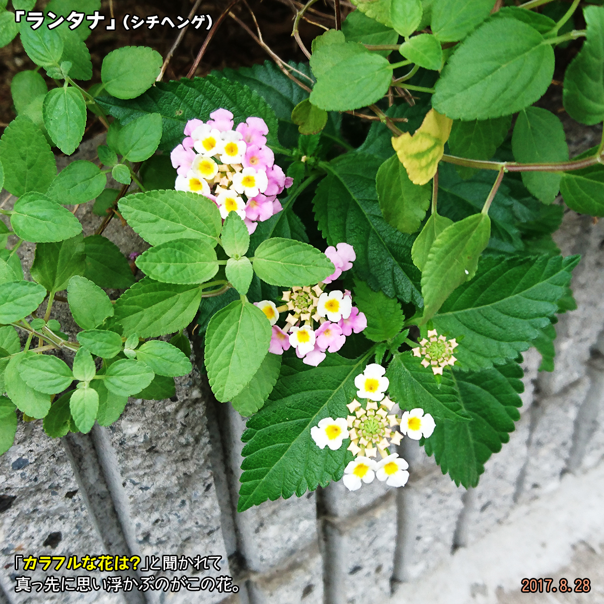 DSC_3667.jpg