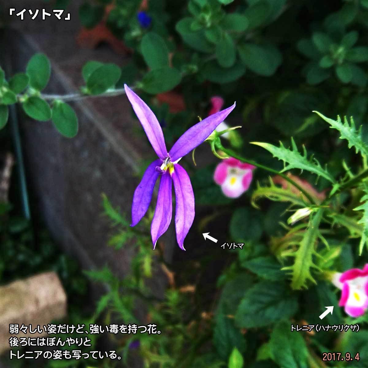 DSC_3745.jpg