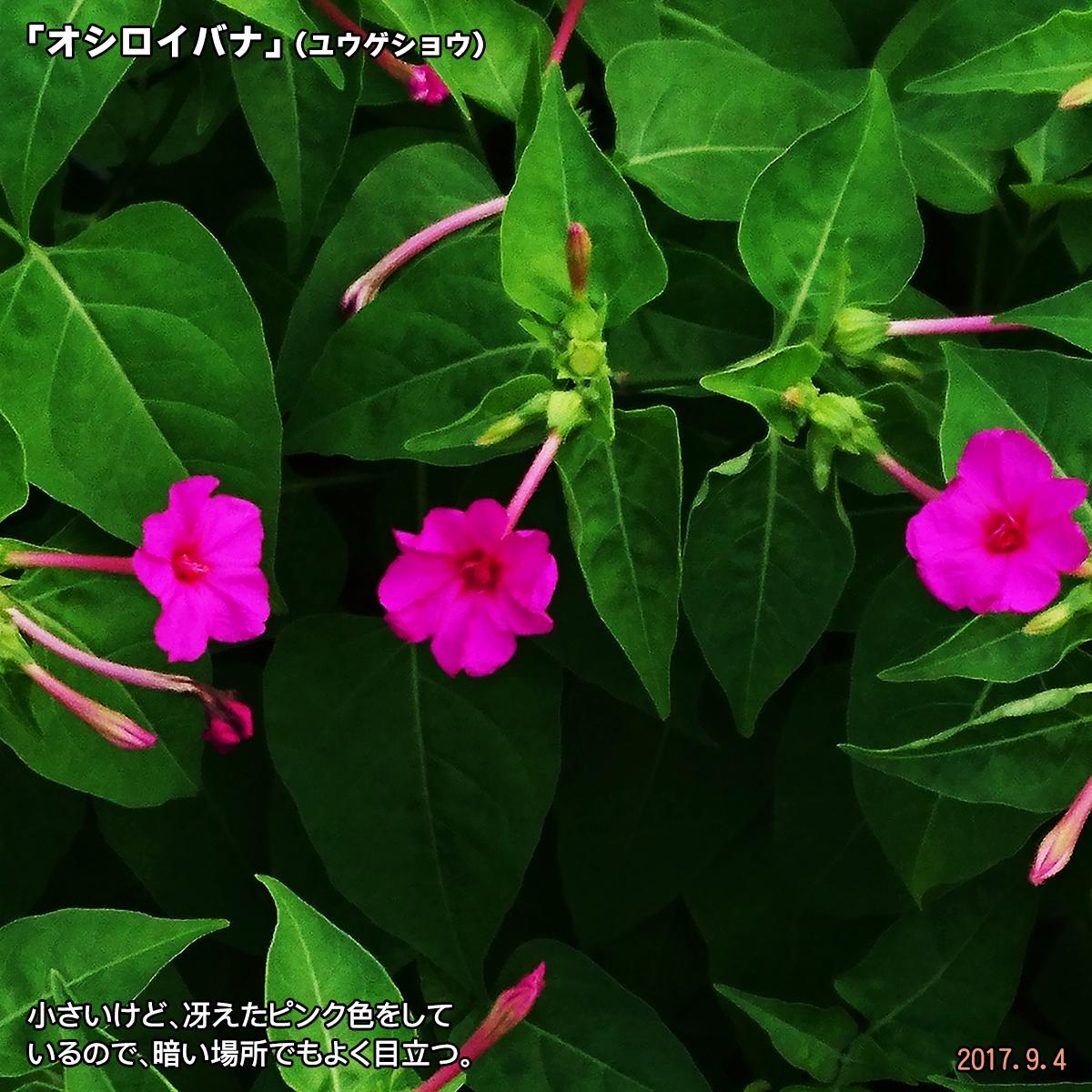 DSC_3762_201711131753360fb.jpg
