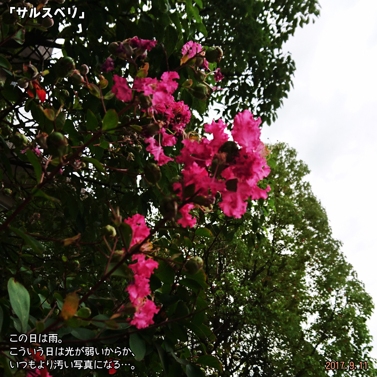 DSC_3878.jpg