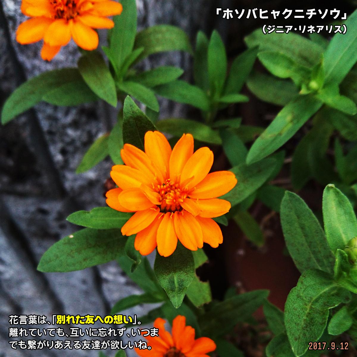 DSC_3913_20171126162426bac.jpg