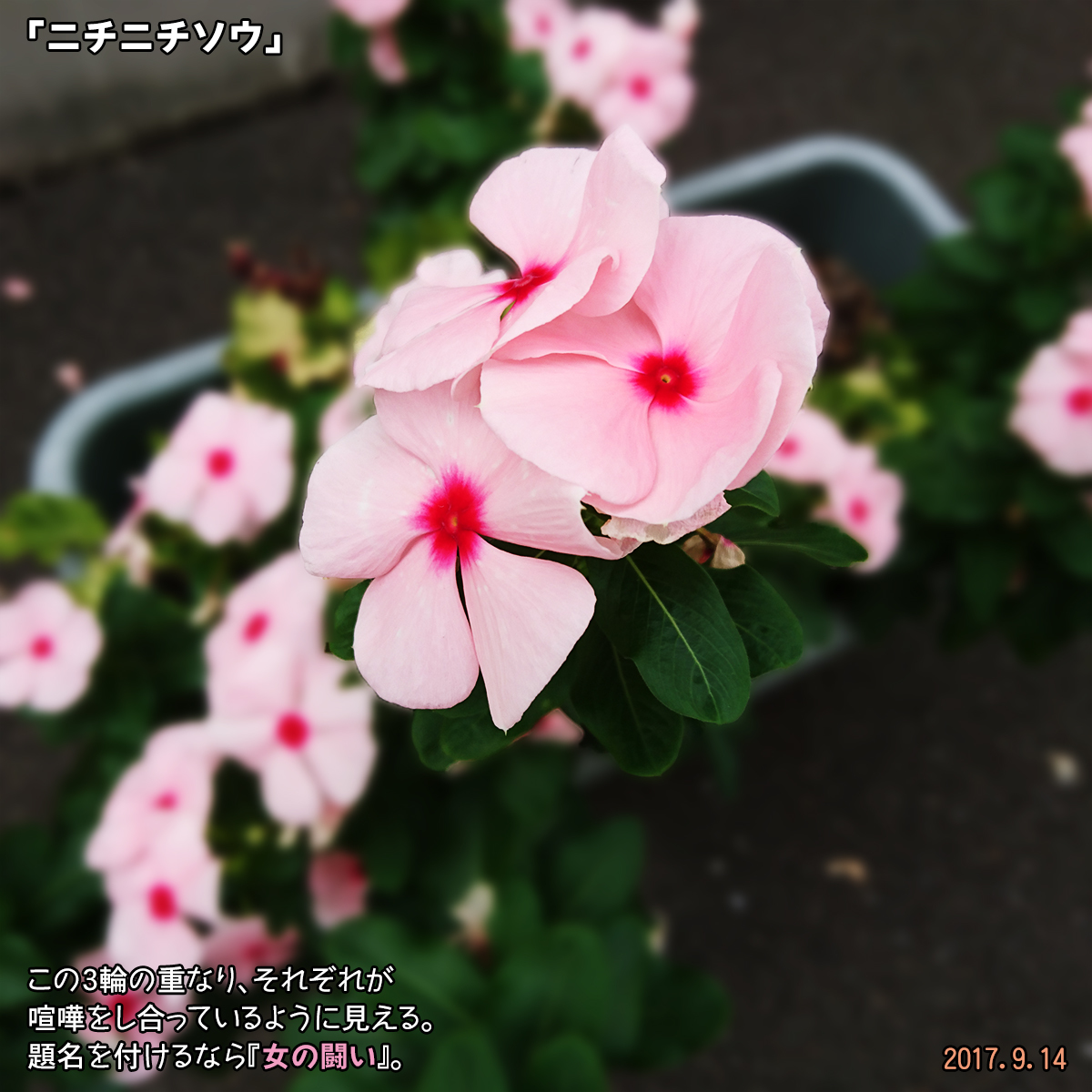 DSC_3960.jpg