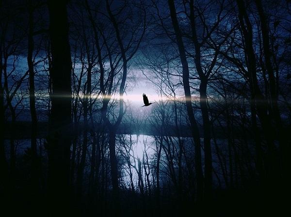 フリー画像・青い森
