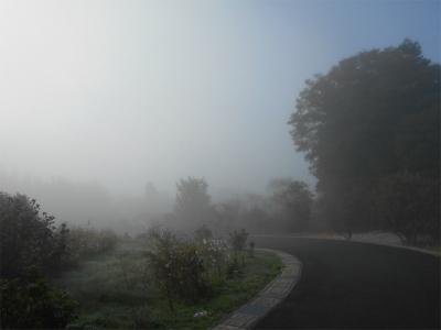 301103霧の朝1